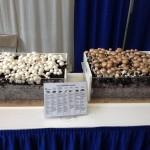 Mushroom vendor display