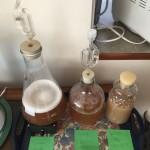 Yeast starters